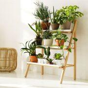 148. Usureaza  curatarea aerului de interior cu plante de apartament