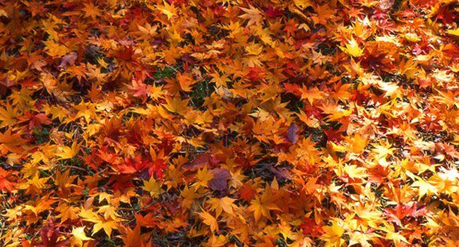 206. Nu arunca si nu aprinde frunzele cazute